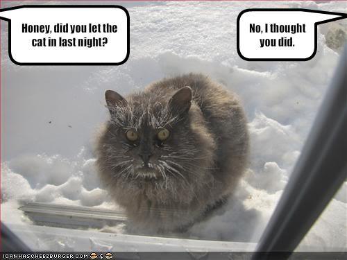 Fotos de cosas curiosas, raras, de risa, gore... extrañas vaya! - Página 5 Funny-pictures-your-cat-spent-the-n