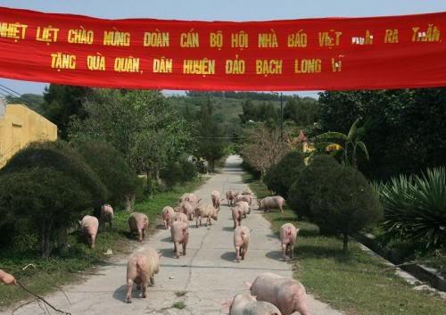 Thề. Kái này chỉ có ở Việt Nam! 4321_view