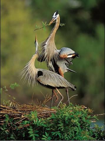 Razne ptice 10
