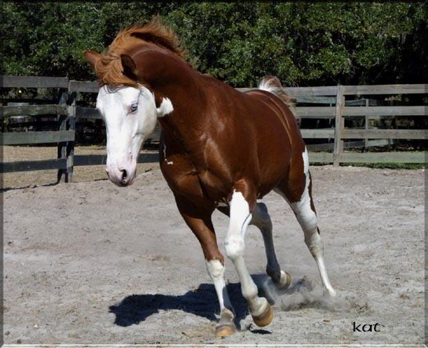 Aor S Horses