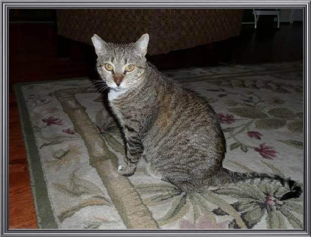Meet My Furries! P1000113