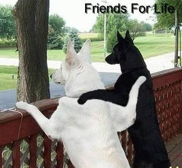 Friends Foe Lyf 150