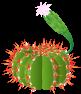 Flowering Cacti Cacti6