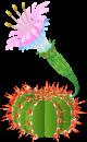 Flowering Cacti Cacti7