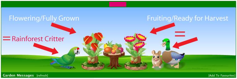 rainforest plants / wildlife (general) Rainforestflowerfruitconfusion