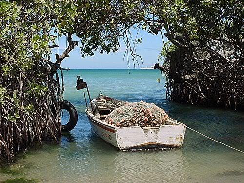 ..:Region Oriental:.. Reposo-pescador-guamache