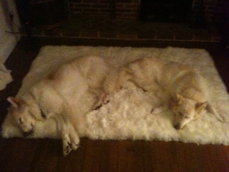 Lucy - 5 years old white female finally homed Photo-45
