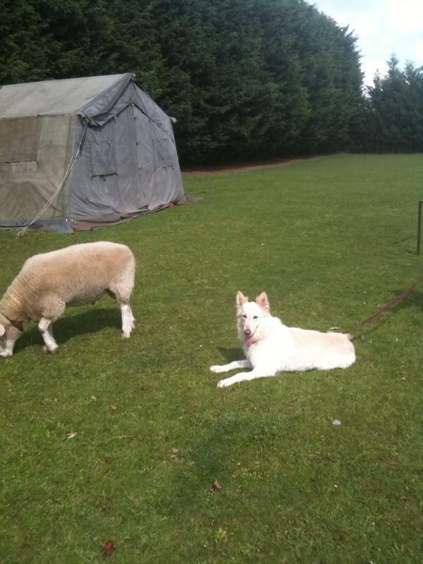 Lucy - 5 years old white female finally homed Photo-49