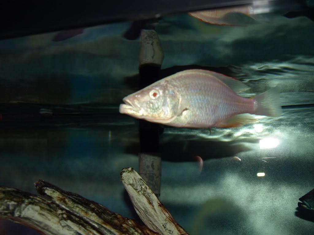 fish sale P3260425