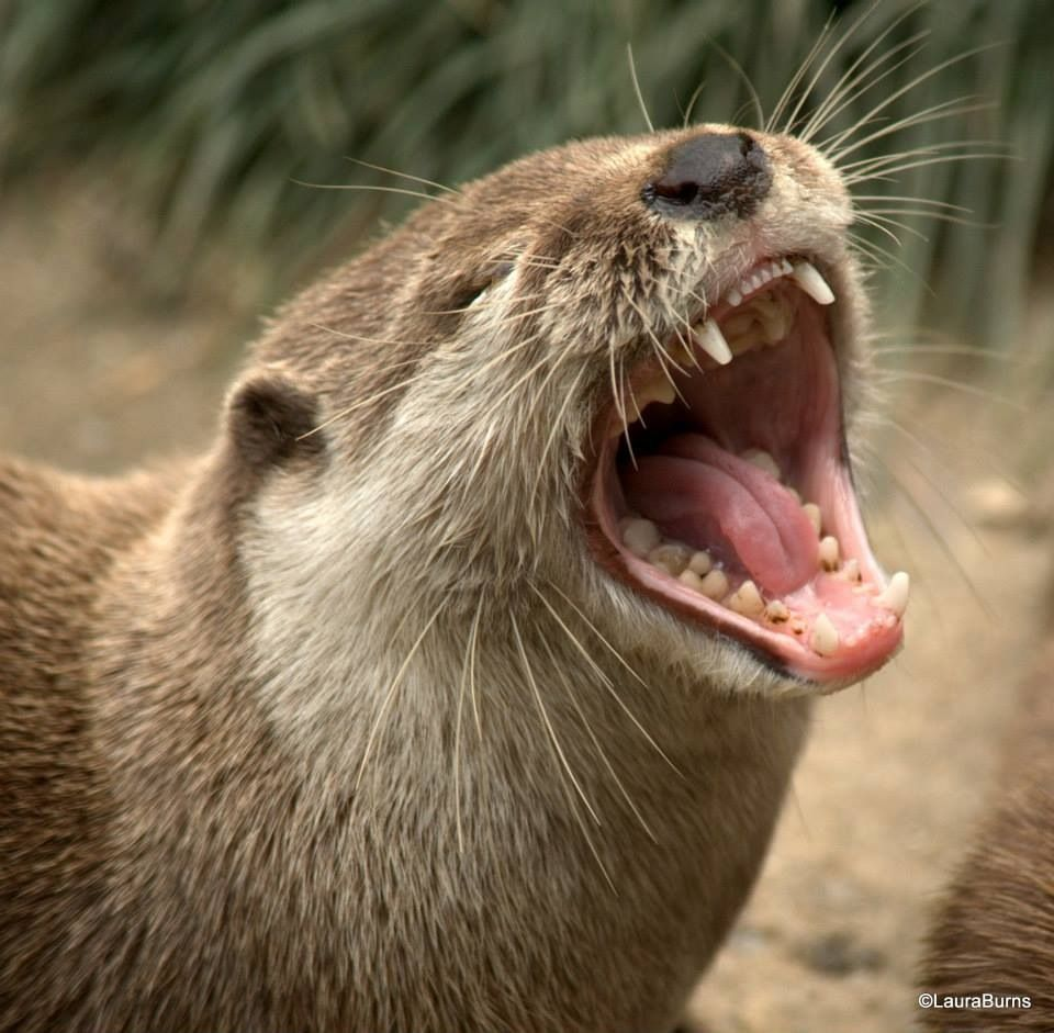 Otters and others 139046D0-3FE4-4D73-A9A0-091B748B3EE7_zpsntsx4ojy