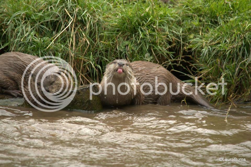 Otters and others 76BDE0A3-DA9A-4721-A110-25E0C37E7789_zpsn1qsdy3h