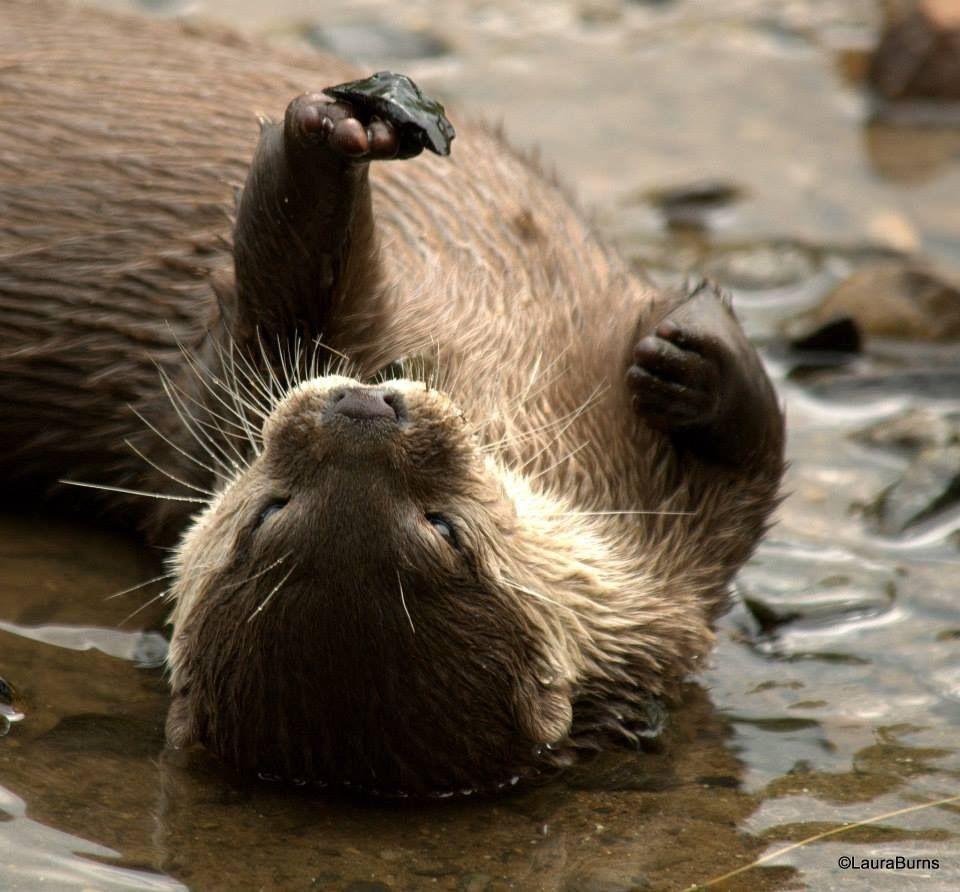 Otters and others 83331977-2087-400B-91E9-D9D0D7BEDF8D_zpsq0blurya