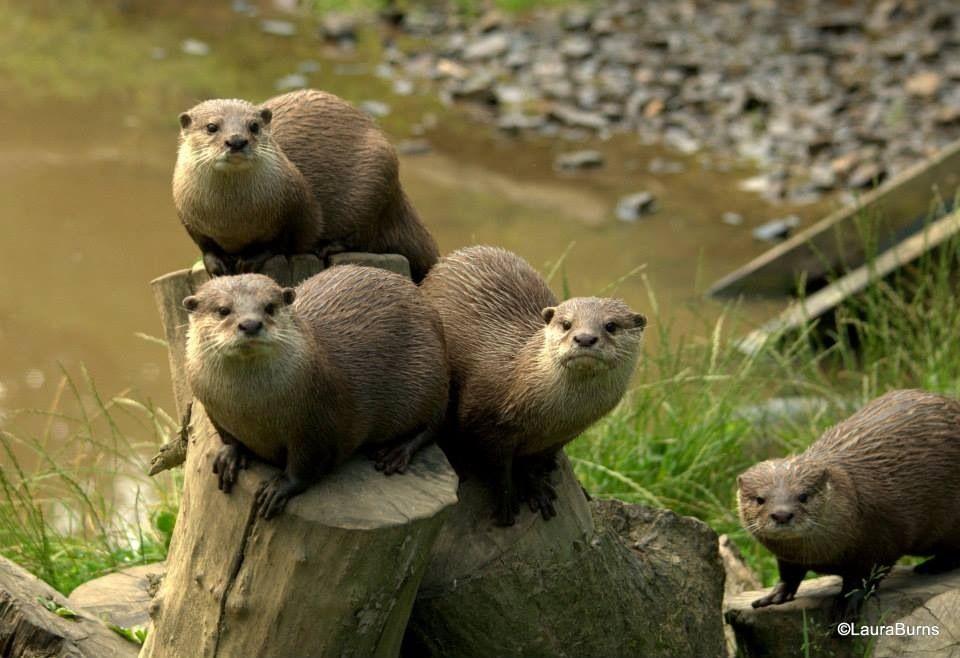 Otters and others F65539F8-F9FD-4537-A241-4652ACB9E29E_zpsu5nqmdnm