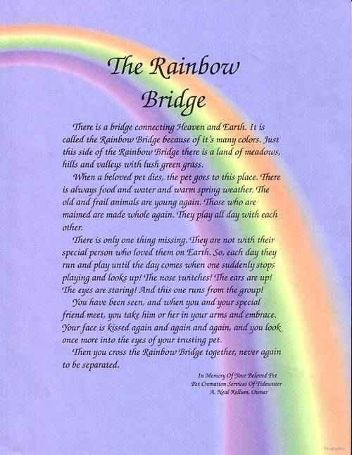 A way to remember your best friend Rainbow_Bridge2