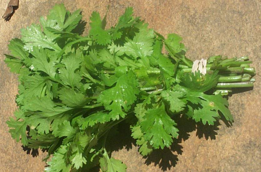 கிட்னி   சுத்தம் குறைந்த்த செலவில்.... Italian-parsley