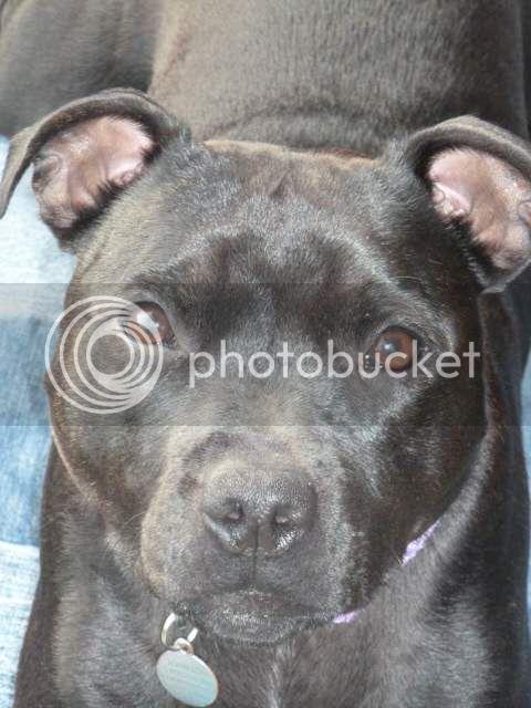 My dogs love a massage! P1010244_zps573895e9