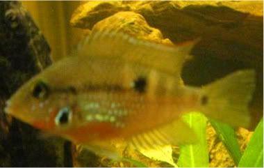 Random CA fish 6190c974-1