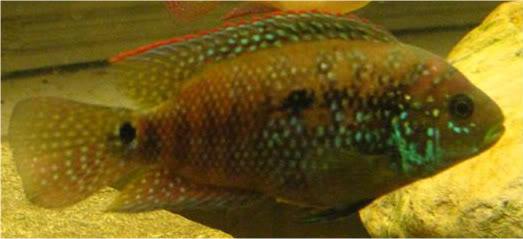 Random CA fish IMG_0033-1