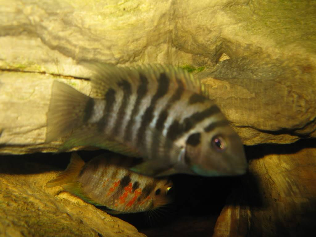 Random CA fish IMG_0084