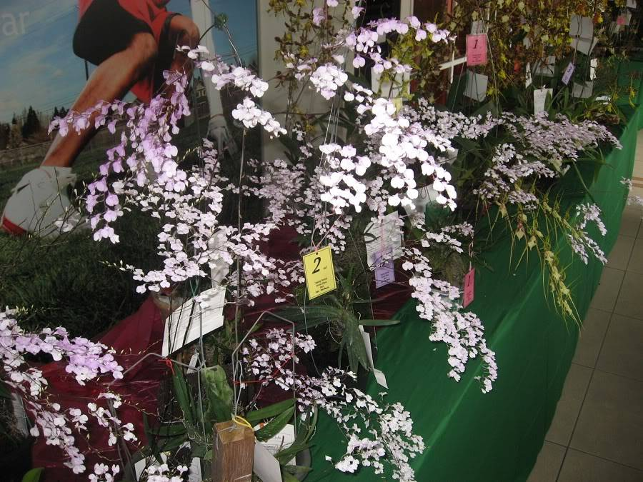 Taiping show - March 2012 IMG_2565