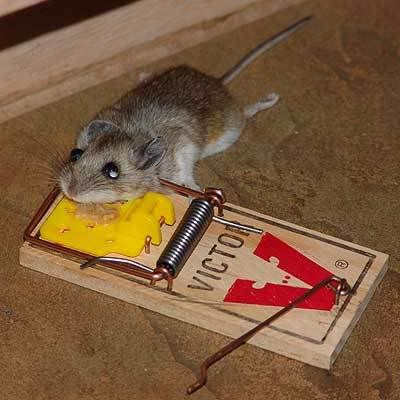 (empty thread) - Page 2 Rat