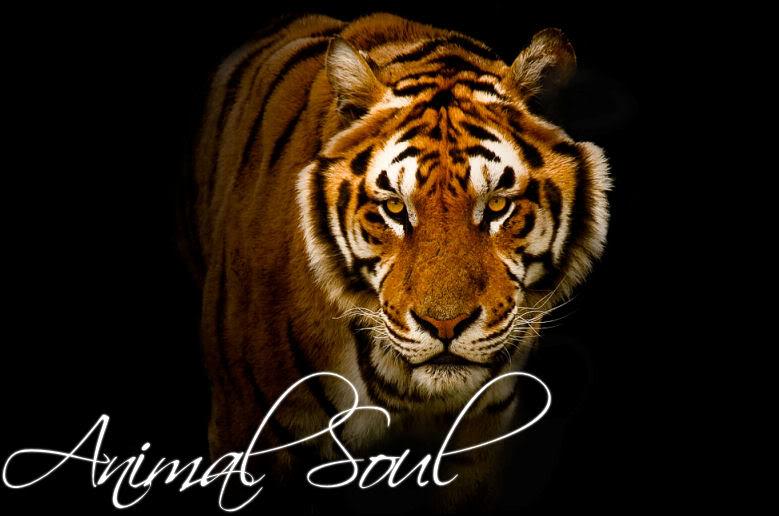 Animal Soul