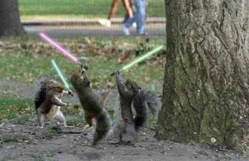 For The Win Game Squirrel