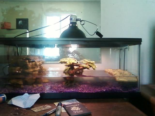 update on my water snakes Waternsakesetip