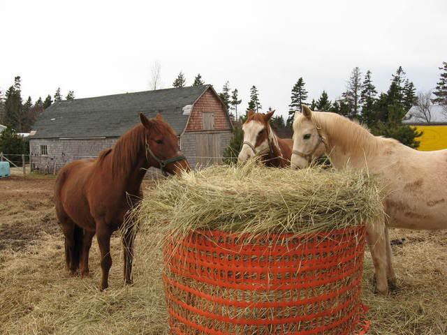 round bale feeder IMG_0942