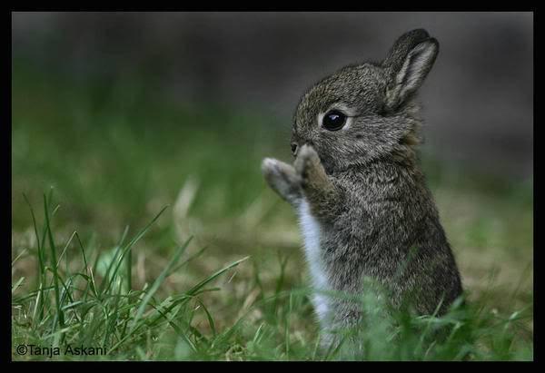Ulqu's release is... Cute_bunny