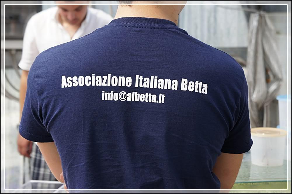 2eme Betta Show Italien 8-10/06/2012 à Ranco/Après 0067