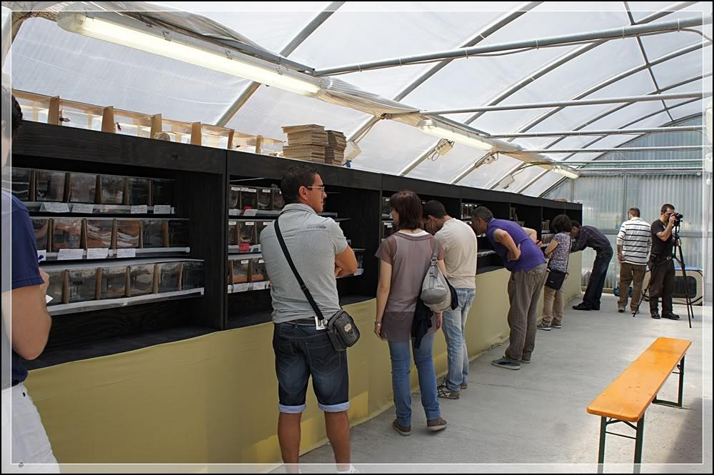 2eme Betta Show Italien 8-10/06/2012 à Ranco/Après 0069