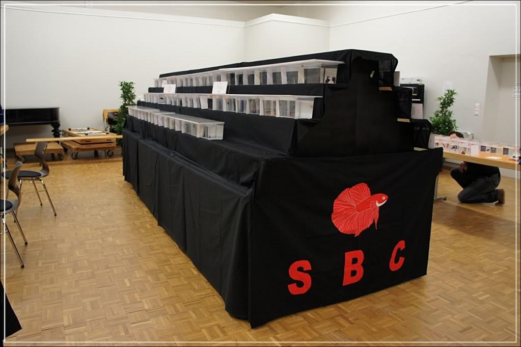 13me Swiss Betta Show: du 4 au 6 AVRIL 2014 Sony0012