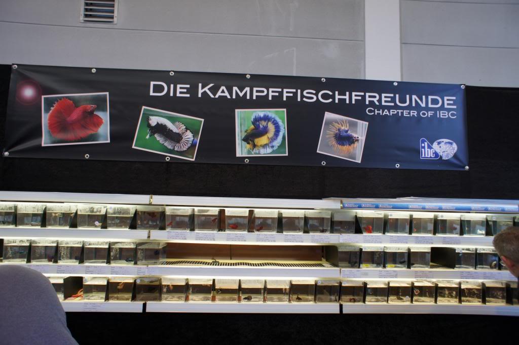 Friedrichshafen 2013 - Kampffischfreunde DSC02425_zps63ee23ca