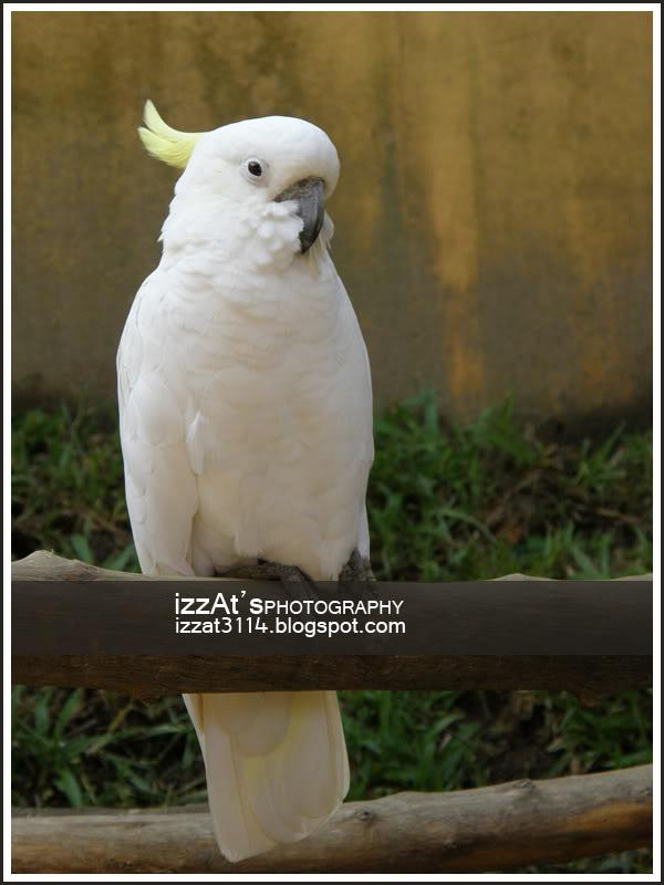 Burung Nuri & Kakak Tua BurungNuri