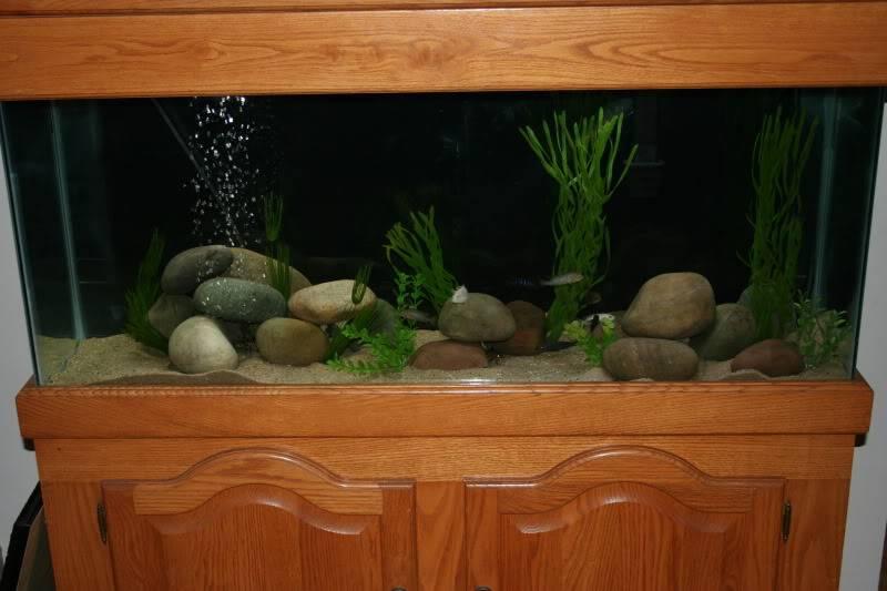 Turtleman's 55G Living Room Tank IMG_0813