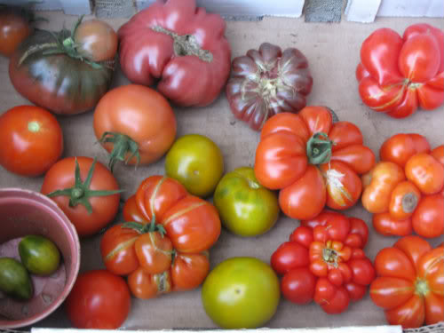 Les tomates et potager de Kawine en 2013 IMG_0335