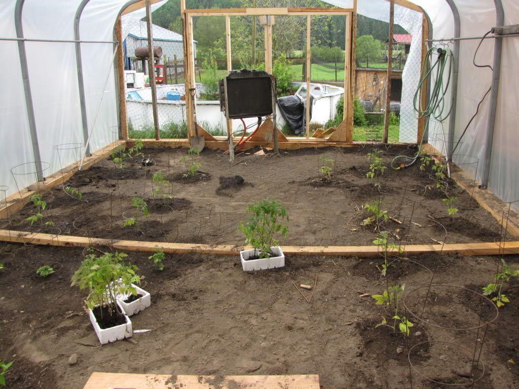Tomates IMG_4212
