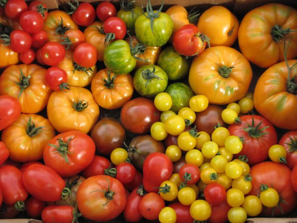 Les tomates et potager de Kawine en 2013 IMG_7978