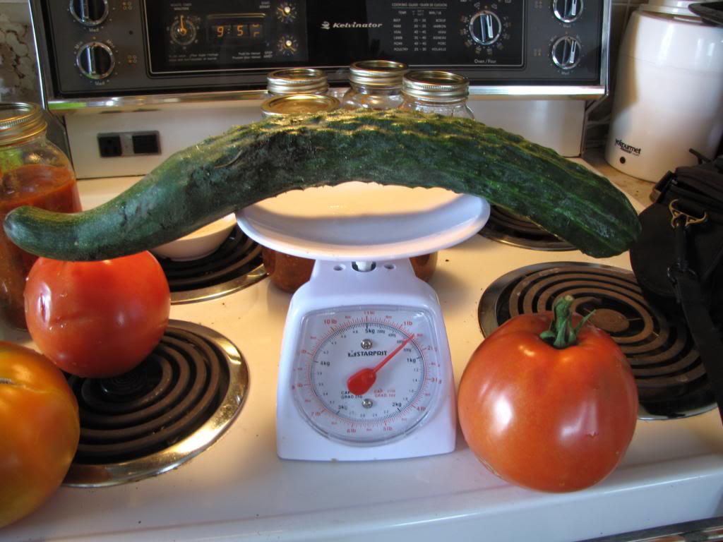 Les tomates et potager de Kawine en 2013 IMG_8023