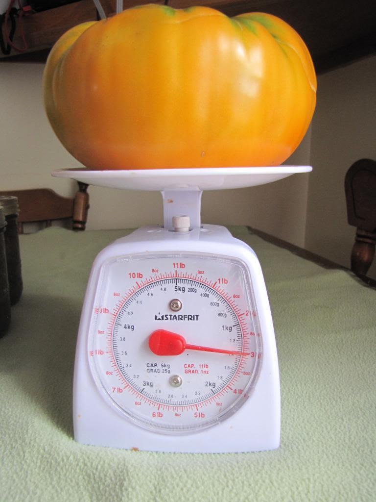 Les tomates et potager de Kawine en 2013 IMG_8030
