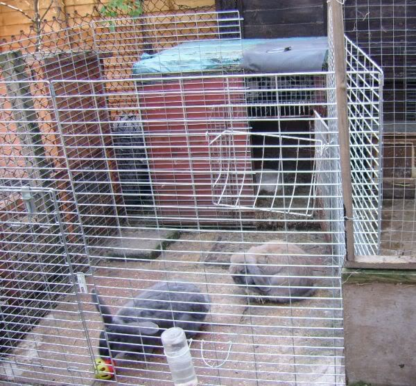Forum Members Rabbits - Page 3 ABackGarden15