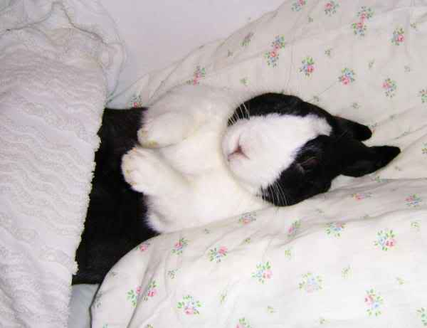 Forum Members Rabbits - Page 2 ATimmybed9