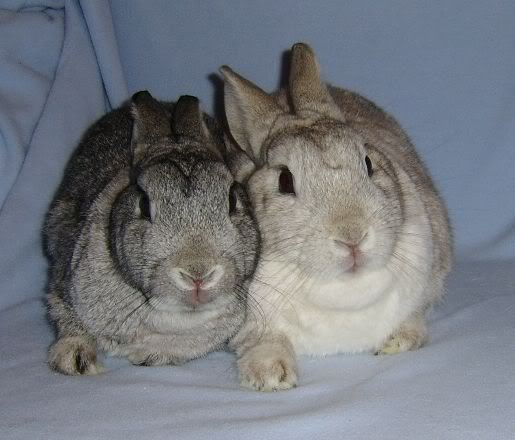Forum Members Rabbits - Page 2 Abunbinkyandbertiewed8