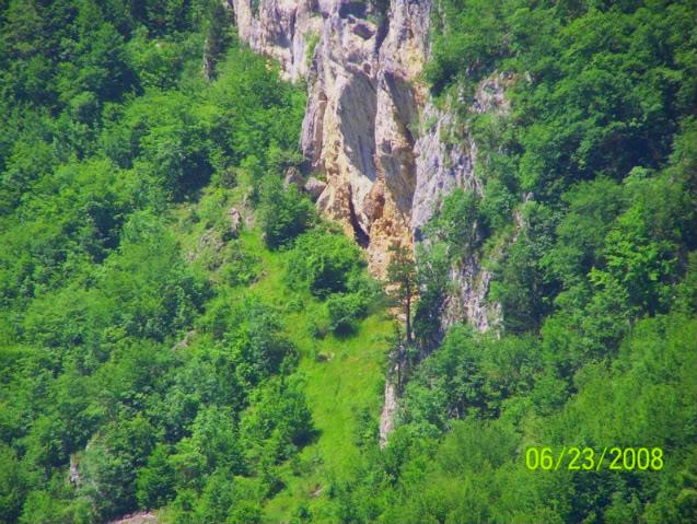Slike  Planine,prirode,naseg kraja 010galcici-1-1