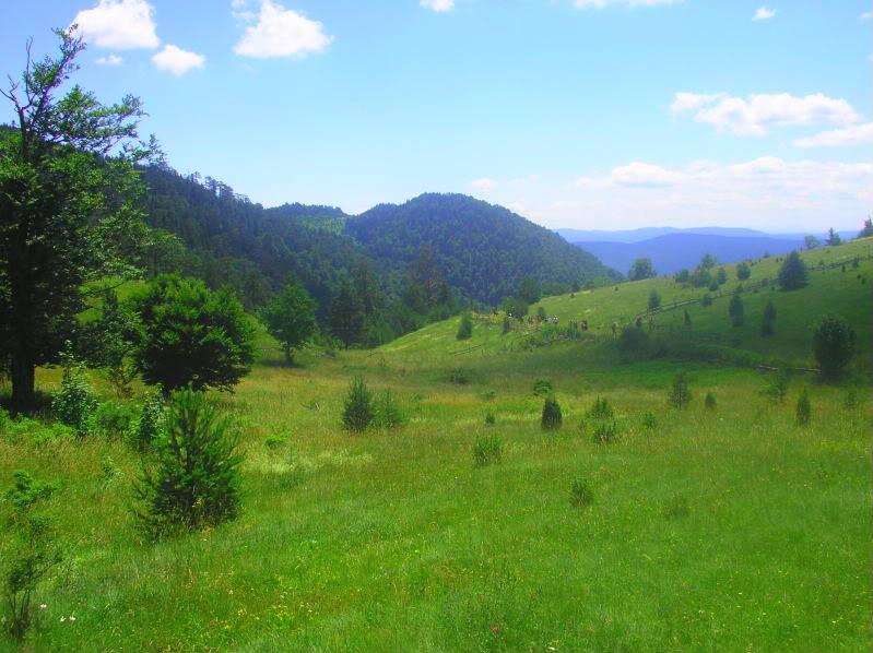 Put kroz nasu planinu.. Slikecavciciisrebrenica182-1