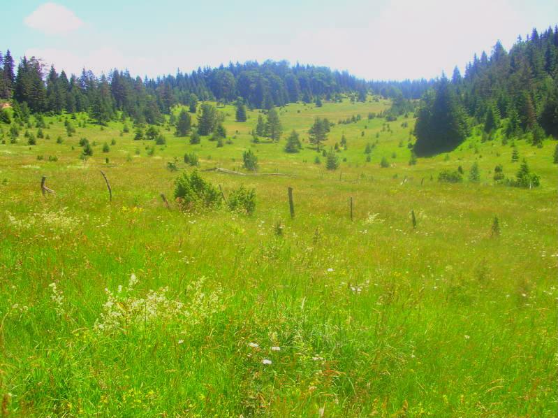 Put kroz nasu planinu.. Slikecavciciisrebrenica196-1