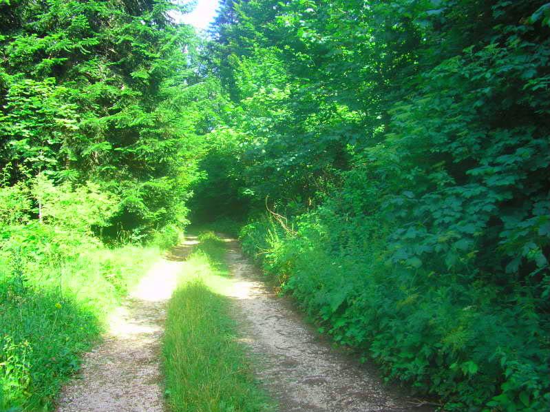 Put kroz nasu planinu.. Slikecavciciisrebrenica250-1