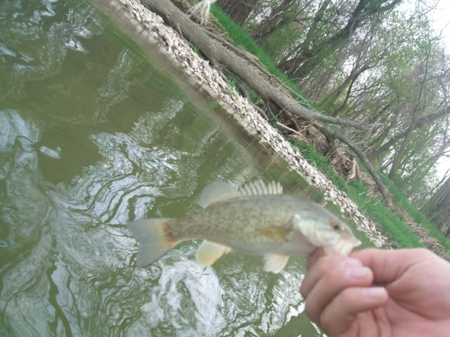 3 of 3/4-26-Portage Whitebass~Smallies-Early DSCF1940