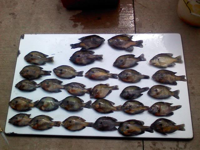 One of the Better days!!! 2 F.O. Gills! 0620091102